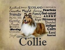 """Collie Rough,Sable w Characteristics. One 16"""" fabric panel to sew.Pic is 8""""x11""""."""