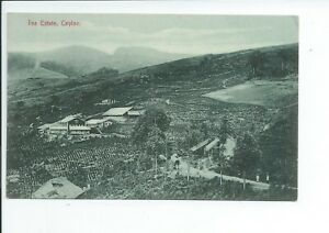 Printed postcard of a Tea estate in Ceylon good condition