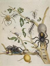 Spiders 1705 Art Print Nature Spider Web 7x5 Inch Reprint nbl
