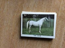 G9b Trade Card Anglo American The Horse No 16 the arab