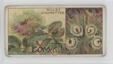 1924 Wills Do You Know Series 2 Tobacco Base #6 A Bedeguar of Wild Rose Card 0e3