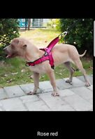 No Pull Padded Dog Harness Quick Fit Reflective Strap Vest forSmall MEDIUM Dogs