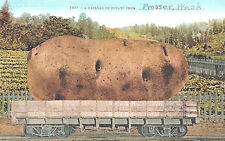VIntage Postcard-A car load of Potato from Prosser, WA, exaggeration Postcard