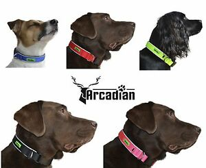 Strong Neoprene Padded Dog Collar. Waterproof & Non Rusting. High Quality.