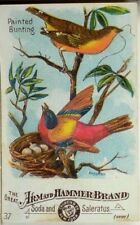 Arm & Hammer Soda & Saleratus No.37 Painted Bunting Birds Nest Clutch Eggs P44