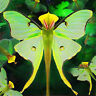DI- 100Pcs Phalaenopsis Orchid Seeds Bonsai Butterfly Flower Indoor Garden Plant
