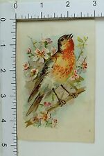 Industrial Insurance Pacific Mutual Life Insurance Co CA Bird In Tree F64