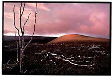 Puu Puai Devastation Trail Hawaii Postcard Volcanoes National Park Unposted