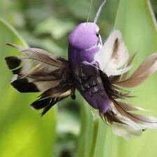 Fluttering Birds Dancing Fly Hummingbird Solar Power Garden Decor Vibration