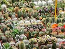 Cactus Seeds Mix Indoor Plant Species Bonsai Succulent Flower Seed Garden 100Pcs