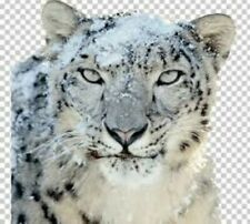 Mac OS X Snow Leopard Version 10.6 - Bootfähige Install- / Recovery DVD