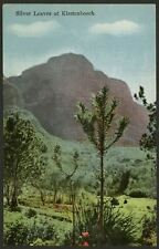 South Africa. Cape Town. Silver Leaves at Kirstenbosch. Linen Effect Postcard