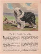 OLD ENGLISH SHEEP DOG, HERDING by Edwin Megargee, vintage print authentic 1942