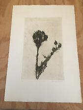 Aubrey Schwartz Flower etching signed numbered ed 25