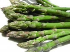 100 MARY WASHINGTON ASPARAGUS Vegetable Seeds + Gift