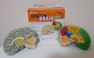 LEARNING RESOURCES Cross Section BRAIN MODEL - Durable Soft Foam - Unused in Box