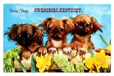 Pekingese Dogs Owensboro Kentucky Postcard Seeing Things Puppies Vintage Pekeing