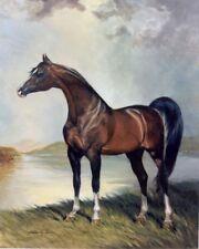 Khemosabi Arabian Horse 350 LE s/n lithograph art print