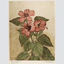Adrianus van Zeegen: Roseneibisch. Kolorierte Radierung.