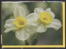 NEUF CARTE TOUTE OCCASION fleur + ENVELOPPE 10 CARTES ACHETEES = PORT GRATUIT
