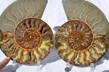 "1474x Cut Split PAIR Ammonite Deep Crystal Cavity 110myo Fossil 239mm XXXLG 9.4"""
