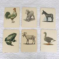Vintage 1950s Art Cards Wall Decor Farm Animals Prints Farmhouse Nursery Lot 6
