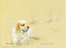 Clumber Spaniel Limited Edition Print by Uk Artist Gill Evans