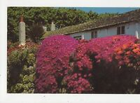 Mesebryanthemum On Stone Wall St Marys Scilly Old Postcard 355a