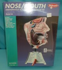 Human Nose Mouth Anatomically Accurate Model Kit Skilcraft #71339 New & Sealed