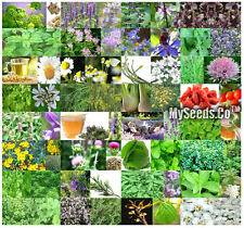 32 Types MEDICINAL Herb Combo, Seeds - From Angelica to Yarrow, COMB. S&H