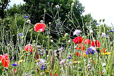 Wildblumen + Wildkräuter über 30 Sorten Naturgarten Wiese Bienen über 500 Samen