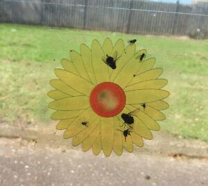 fly trap window stickers