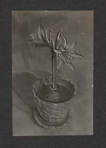 BAS RELIEF PHOTOGRAPH OF POTTED PLANT FLOWER OLD/VINTAGE PHOTO SNAPSHOT- E348