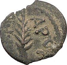 Porcius Festus  Jerusalem Nero Ancient  Greek / Roman Coin Palm branch   i36713