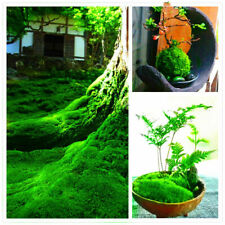 100Pcs Green Moss Seeds Bonsai Rare Exotic Plant For Home And Garden Decoration