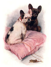 FRENCH BULLDOG CHARMING DOG GREETINGS NOTE CARD BEAUTIFUL DOGS SIT ON CUSHION