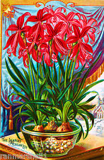 Scarlett Mexican Lily Vintage Flowers Seed Packet Advertisement Poster