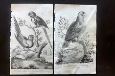 After George Edwards 1798 Pair of Parrot Prints. Book Plates
