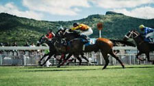 Awaken the Professional Gambler Within Horse racing system