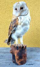 Taxidermy Mounts Barn Owl Real Bird Mounted Stuffed  Stand Decor On Wood Rare