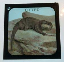 More details for london zoo otter glass magic lantern slide 1920's