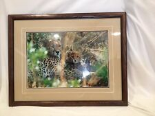 "A Hiding Place Cheetahs Signed Thomas Mangelsen 1994 20 ""x 14"""