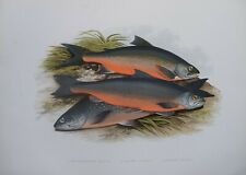 """Fish -Windermere, Cole'S, Gray'S Charr For Houghton'S """"Fresh Water Fishes"""", 1879"""