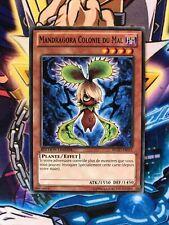 Yu-Gi-Oh! Mandragora Colonie du Mal WGRT-FR051