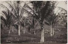 Original vintage 1930s MALAYSIA, oil palm plantation, RPPC