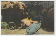 [67133] OLD POSTCARD SCENE in the 7-TON CORAL REEF at MARINE STUDIO, MARINELAND