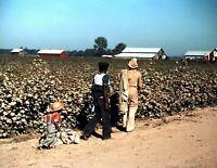 "1939 Picking Cotton Near Clarksdale MS Old Vintage Photo 8.5"" x 11"" Reprint"