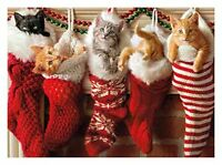 NEW Avanti Press Christmas Cards, Stocking Full of Kittens, 20 Count (32559)