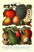 Lithographie: Tropische Früchte - Original 1906 Bild Illustration Mango Guajave