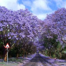 50Pcs Worlds Fastest Growing Tree Princess Paulownia Tomentosa Seeds Plant PT102
